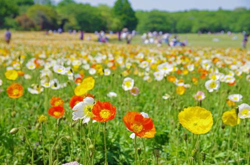 昭和記念公園201405-11
