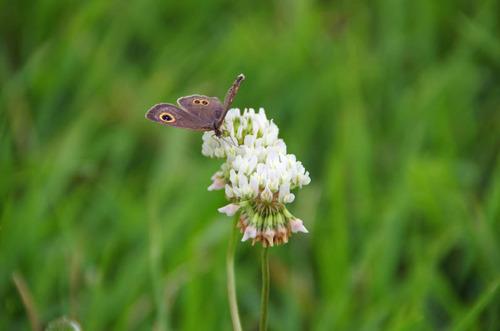 河川敷の花201207-5