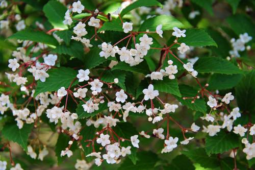 昭和記念公園の花201004-2