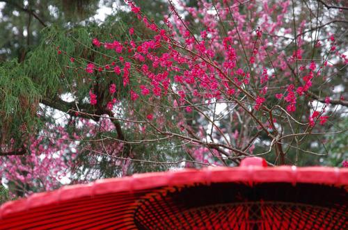 京王百草園201503-8
