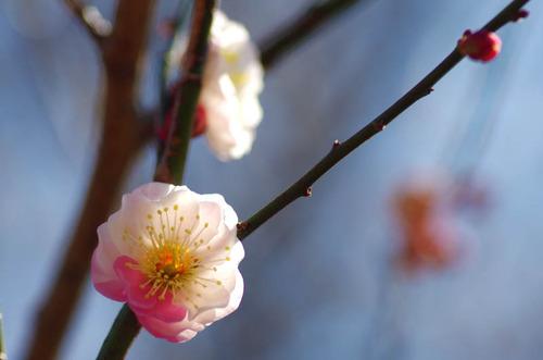 昭和記念公園201403-5