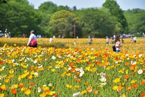 昭和記念公園201505-10