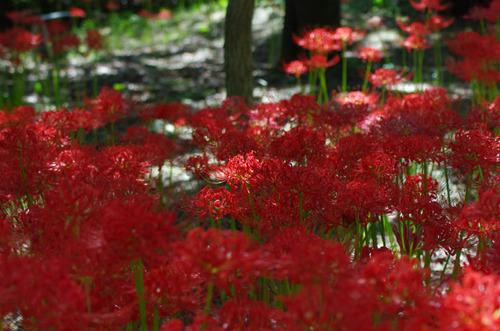 昭和記念公園201209-6