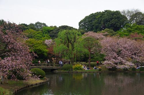 新宿御苑201104-11
