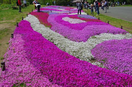 昭和記念公園20120428-13