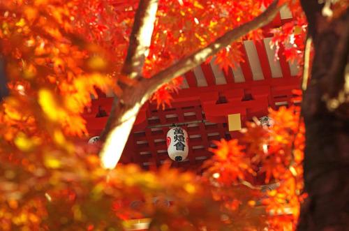 高幡不動201411-10