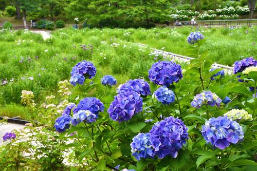 昭和記念公園201606-8