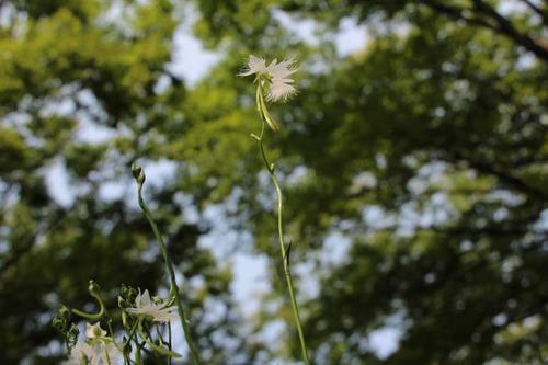 昭和記念公園201308-5