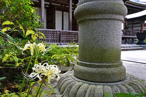 高幡不動尊201609-2