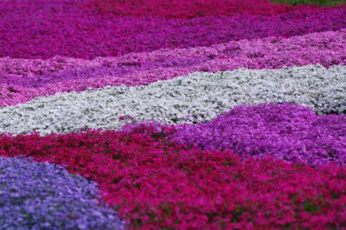 昭和記念公園201004