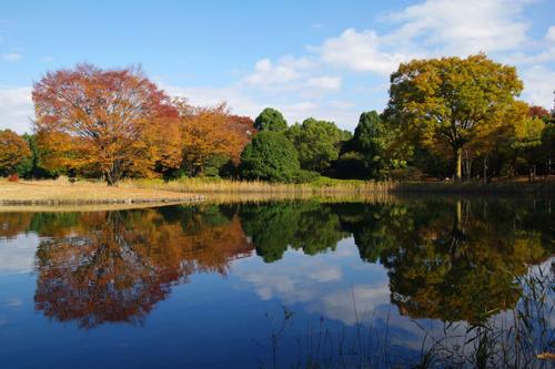 昭和記念公園201011-2