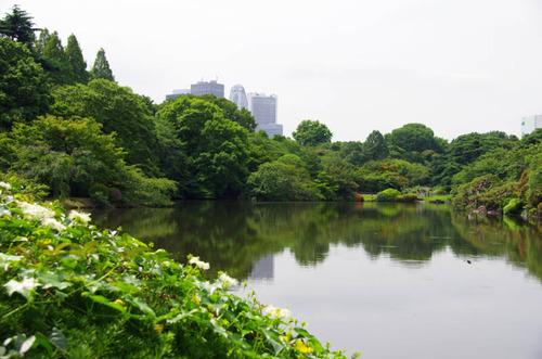 新宿御苑201206-1
