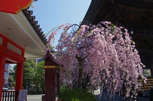 高幡不動尊201104-13