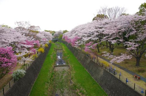 昭和記念公園201404-2