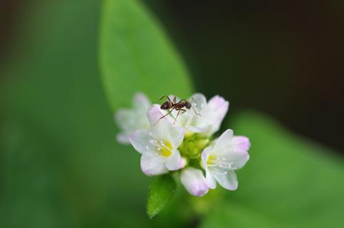 散歩道の花201210-15