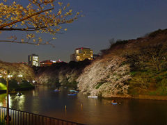千鳥ヶ淵夜桜-7
