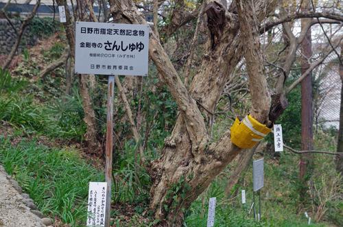 高幡不動201403-8