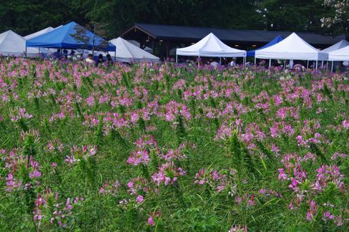 昭和記念公園201009-6