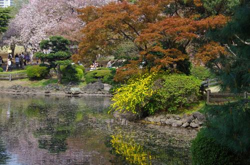 新宿御苑201104-4
