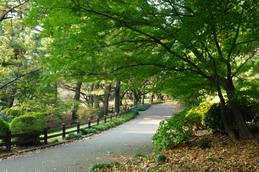 新宿御苑の秋1-7
