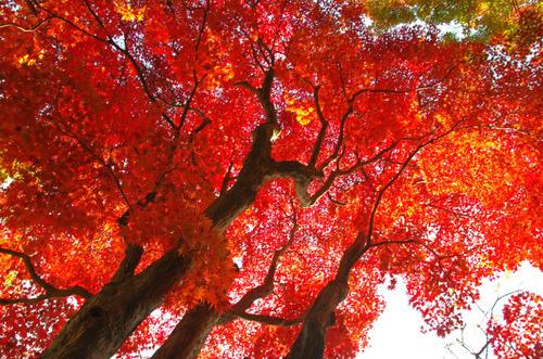 京王百草園201411-10