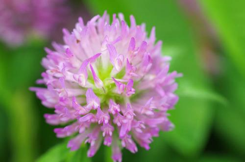 河川敷の花201207-1