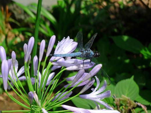 散歩で見つけた昆虫-5