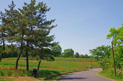 昭和記念公園201405-5