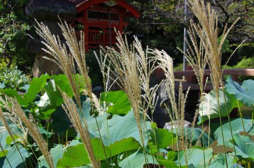 高幡不動201209-6