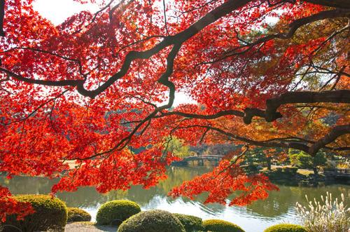 新宿御苑201312-12