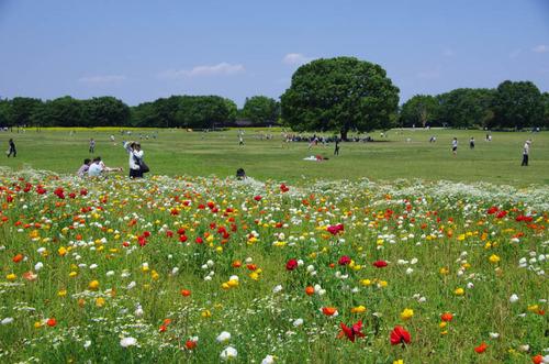 昭和記念公園201205-16