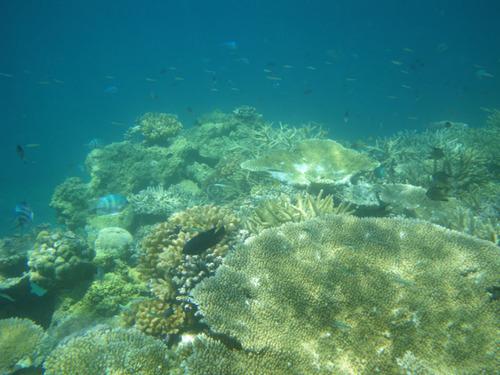 西表島船浮イダの浜201108-13