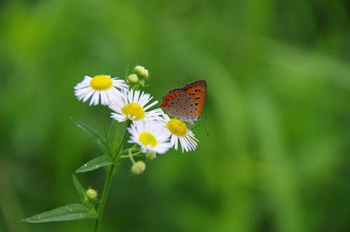 河川敷の花201207-7