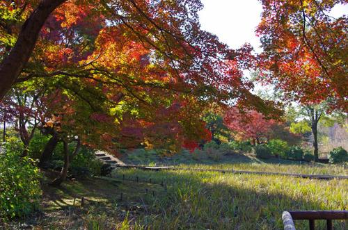 昭和記念公園201111-4