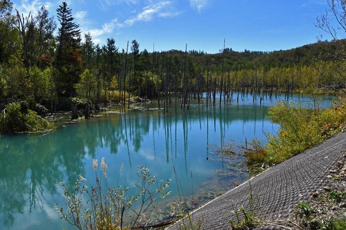 青い池201709
