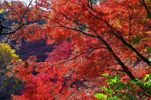 京王百草園201311-11