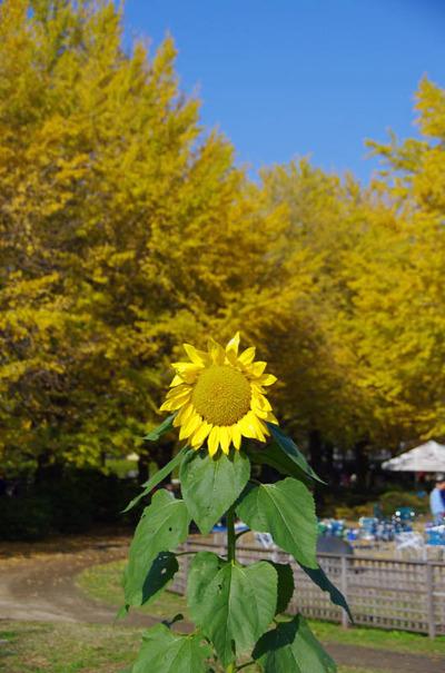 昭和記念公園201111-11