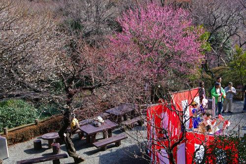 百草園梅祭り201002-8