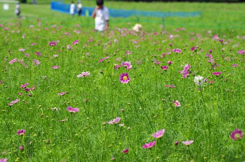 昭和記念公園201108-6