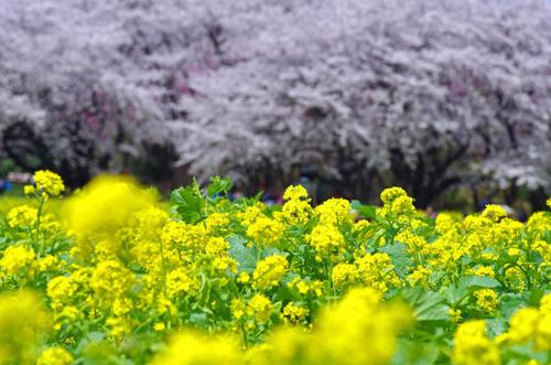 昭和記念公園201404-6
