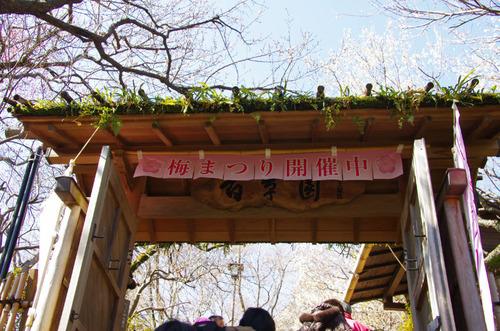 百草園梅まつり201102-12
