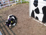 ジェラート屋さんの牛