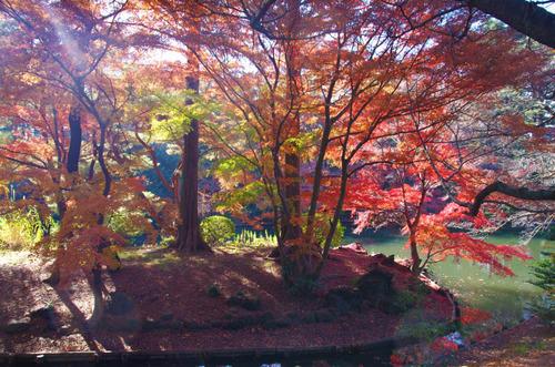 新宿御苑201312-4