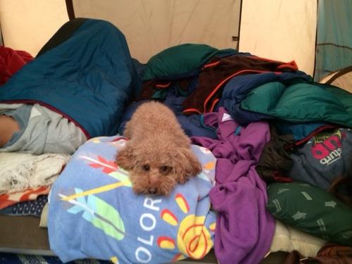 そらテント