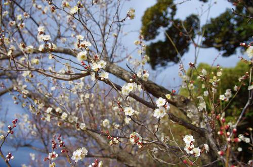 昭和記念公園201401-11
