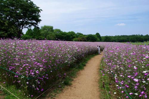 昭和記念公園201006-5