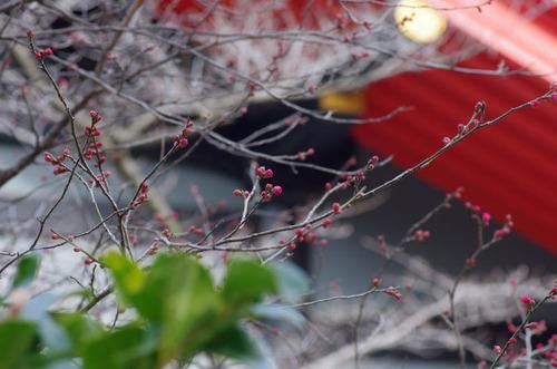 高幡不動201401-7