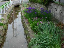 近所の用水路200906-3