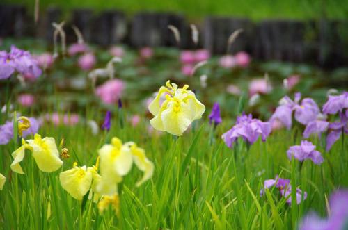 昭和記念公園201206-2