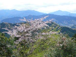 高尾山0420山頂からの景色